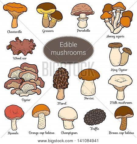 Color Set Of Edible Mushrooms
