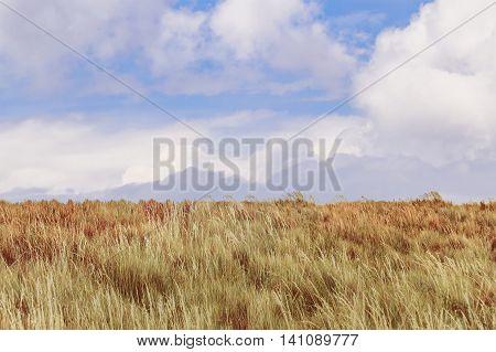 Meadow landscape scene from the top of Cruz Loma hill Quito Ecuador