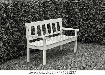 Black and white shot of a white bench at a beech hedge