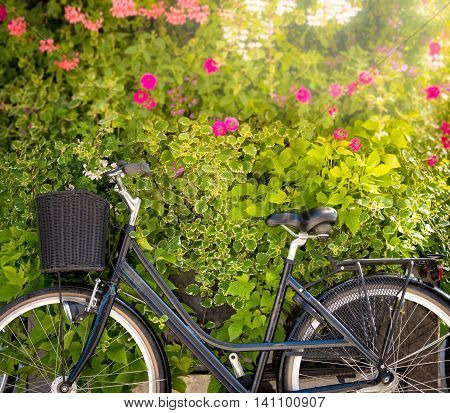 Bicycle with green flower wall in background on sunny day in Turku Finland Scandinavia Europe