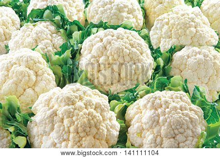 Cauliflower raw food vegetable on white background