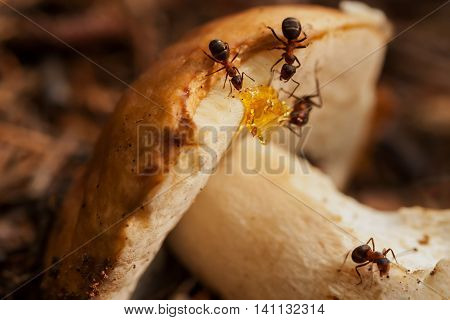 Ant societies have division of labour, communication between individuals, and ability to solve complex problems. These parallels with human societies have long been an inspiration, subject of study
