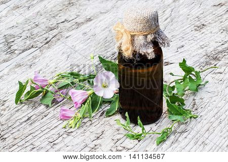 Medicinal plant field bindweed (Convolvulus arvensis) and pharmaceutical bottle on old wooden table. Used in herbal medicine honey plant