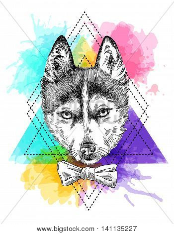 Beautiful hand drawn vector illustration sketching of husky. Tattoo style drawing. Use for postcards, print for t-shirts, posters.