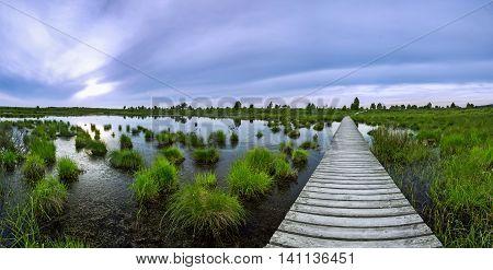 Wooden boardwalk leading over a swamp in the High Fens in beldium