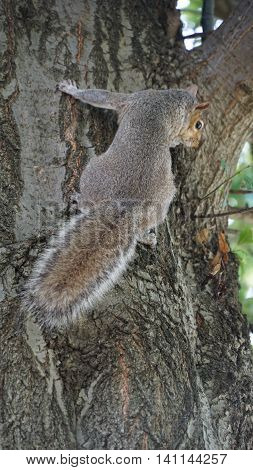 Squirrel making its way up a tree