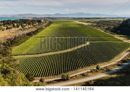 aerial view of vineyards in Marlborough, New Zealand