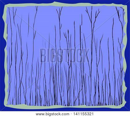 Blue Framed Illustration Of Tall Thin Trees