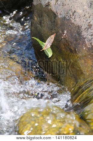 two leaves stuck on the stone above the water in the river