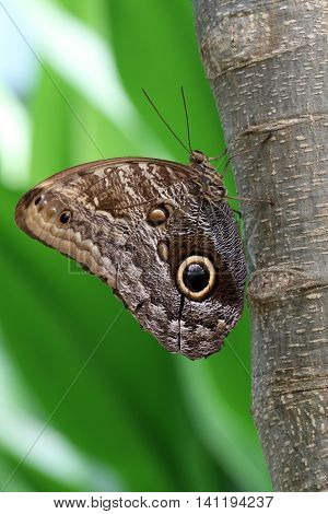 A beautiful butterfly with a green background