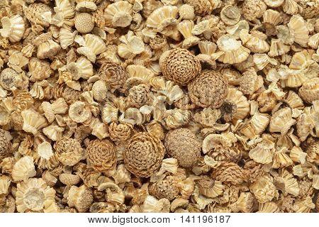 Organic dry Akarkara (Anacyclus Pyrethrum) seeds. Macro closeup background texture. Top View.