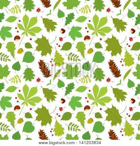 Seamless pattern of different tree leaves - oak, chestnut, birch, Rowan, linden, jasmine, lilac, maple, willow, poplar, sycamore, Rowan berries, acorns, pine cone, nuts on white background.