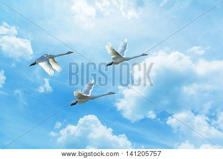 Tree tropical cranes fly overhead against bright sky