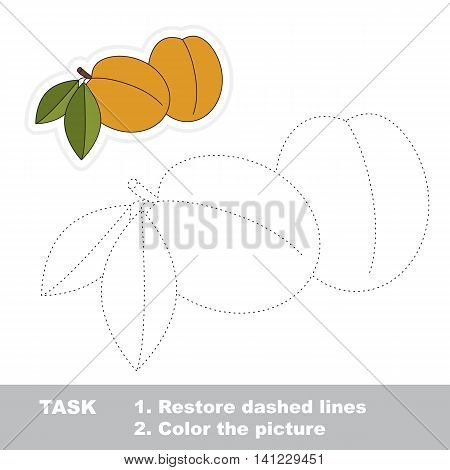 Apricot in vector to be traced. Easy educational kid game. Simple level of difficulty. Restore dashed line and color the picture. Trace game for children.