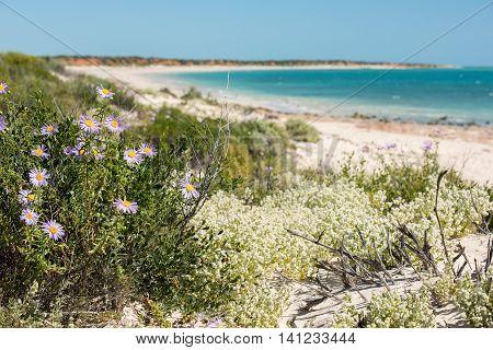 Australia Northen Territory Landscape Francois Peron Park