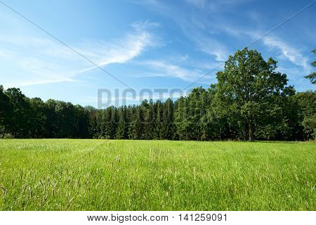 Green Summer Meadow With Several Trees In Background