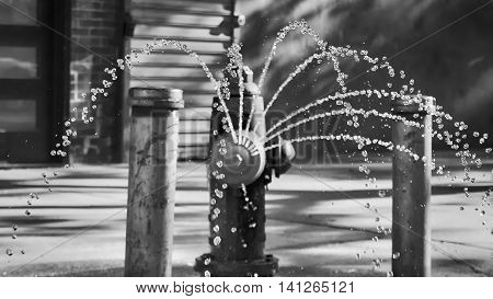 A black and white shot of a fire hydrant spraying water onto the street, taken in Brooklyn, NY.