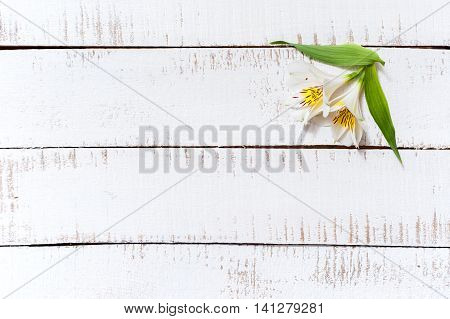 White Flowers With Green Petals On A Wooden Table