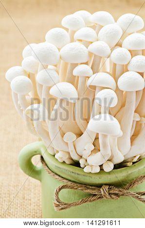 The fresh White Shimeji mushroom Edible mushroom
