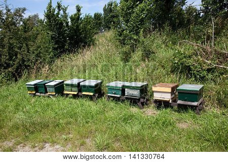 A row of green beehives in grassland