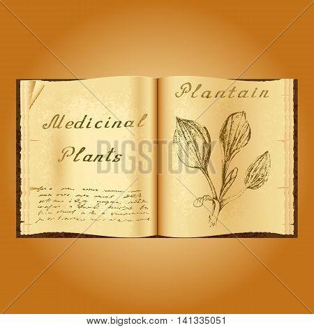 Plantain. Botanical illustration. Medical plants. Old open book herbalist. Grunge background. Vector illustration poster