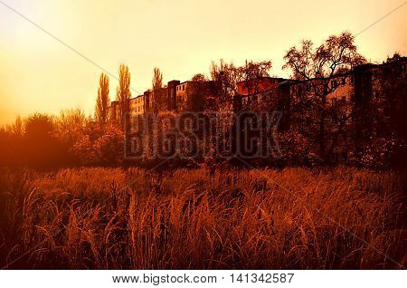 The early sun over long grass in an empty city block