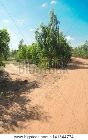 Rural road through row of trees in country side Thailand