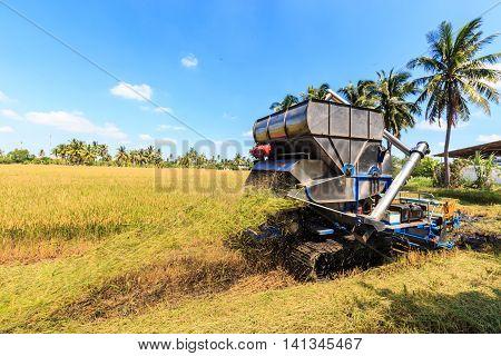 Combine Harvester In Rice Field