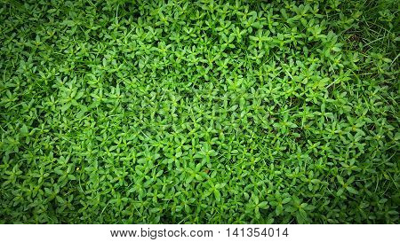Abstract textured background of green grass and weeds.