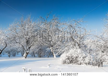 Trees covered with snow at january morning poster