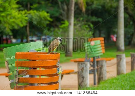 PORTO ALEGRE, BRAZIL - MAY 06, 2016: bird standing at the top of a colorfull trash can in the park.