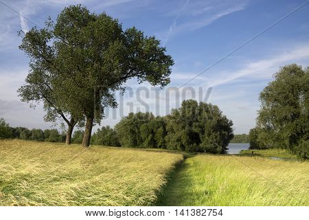 Floodplain from the river Waal between Gorinchem and Vuren