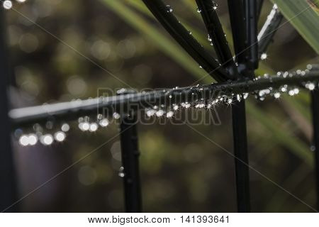 Raindrops on Black Garden Trellis with Bokeh Background