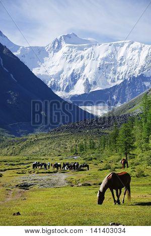 Horses at Akkem Lake, Altai Mountains, Russian Federation