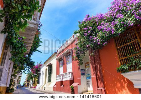 Flowers And Colonial Facades