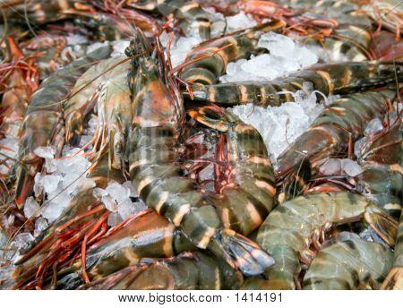 Big fresh tiger prawns on the market poster