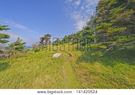Remote Wind Blown Green Gardens trail on the Atlantic Ocean in Gros Morne National Park in Newfoundland Canada