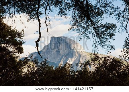 Majestic Half Dome framed by tree branches