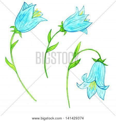watercoolor drawing blue bellflowers isolated at white background, painting flowers, snowdrops, hand drawn illustration