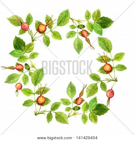 round floral frame with watercolor branches of briar with green leaves and orange and red berries, hand drawn illustration, painting summer background
