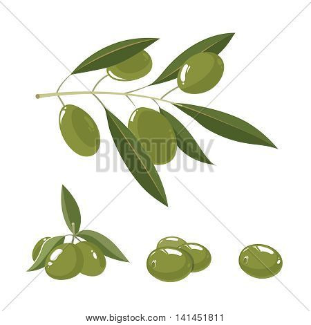 vector illustration set of white Olives with leafs isolate on light background. Pictures for your personal design project.