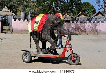 Hua Hin Thailand - January 2 2010: Elephant rides a special motorcycle during a performance of the Hua Hin Elephant Show