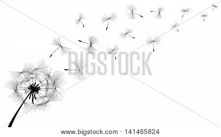Dandelion flower in black on a white background.
