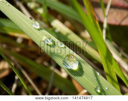 Rain drops on grass blade on meadow
