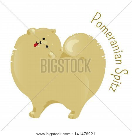 Pomeranian spitz isolated. Pom Pom. Classed as toy dog breed for small size. Compact, has abundant coat with a highly plumed tail. Part of series of cartoon puppy species. Child fun icon. Vector