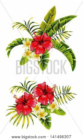 Tropic summer flower hibiscus and plumeria Seamless vector pattern with palm banana leaf and plants. Composition with flower jungle white background. Hand drawn fashion bunch exotic flower wallpaper.