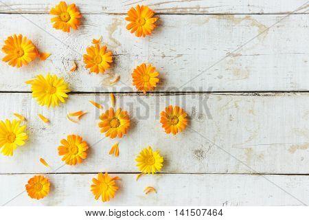 Flowers Of Calendula