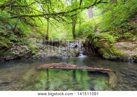 Balch Creek along Wildwood Trail in Portland Oregon