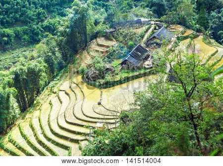 House Onterraced Rice Field Hill