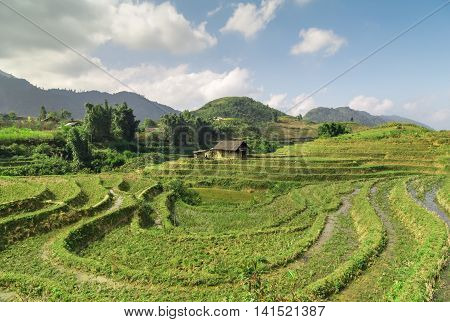 Asia Village Agriculture Rice Field Hill